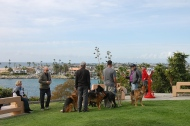 Wherever hubby shows up with a bunch of dogs people take pictures of him.....