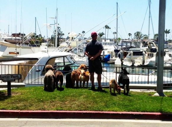 Hubby and the dogs overlooking the harbor while a stranger took this picture of them....
