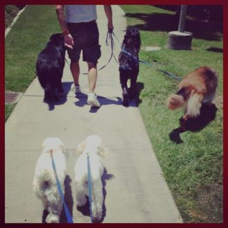 Saturday afternoon walk.