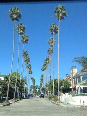 Palm trees - xoxo