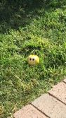 ball with goofy grin in my yard