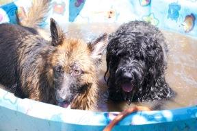 Pupps and Atticus chillen