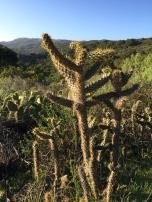 Kaktus mal anders