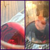 suicide bugs ruined our wine... :(