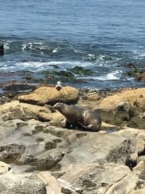 another stinky Sea Lion