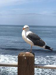 Moewe - so wird das geschrieben Tanja. Oder bleib beim Englischen: Sea gull - lol